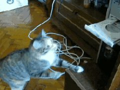Cat vs dvd-rom