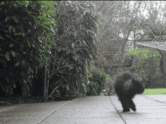 Two legs cat