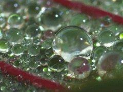 Rain bubble