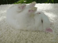 Rabbit sleep