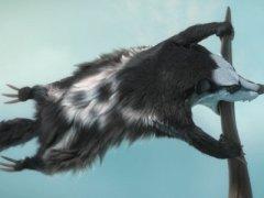 Jolly Roger raccoon
