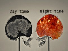 Brain at day and night