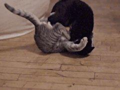 Cat fight technique