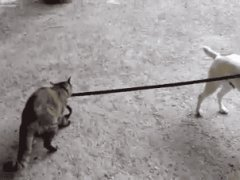 Cat taking the dog home