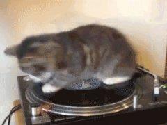 DJ Kitten