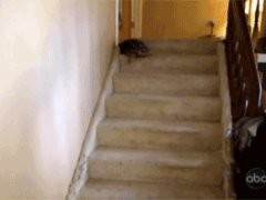 Turtle on the stairs