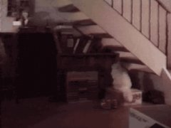 Gravity Cat Climbs Stairs Upside Down