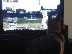 Dog attacks TV for baseball