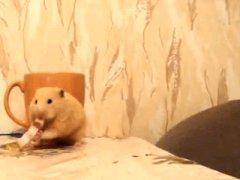 Greedy hamster