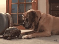 Turtle bites dog