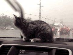 Kitten reaction to windshield wipers