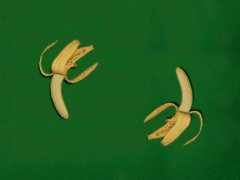 Banana wortex