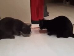 Two cats, one bowl