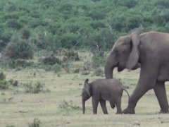 Elephant family meets againg