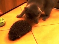 Using hedgehog as a brush