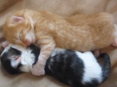 Cute kittens hugging