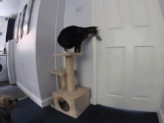 Cat opens door to escape kitchen