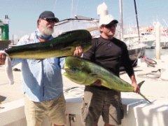 Sea Lion stealing big fish