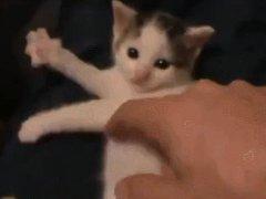 Kitten plays the air harp