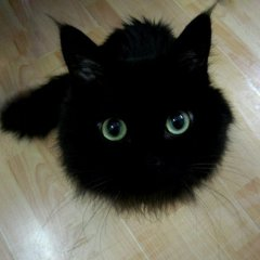 Black and fluffy