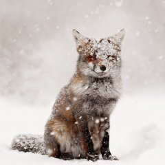 Fairytale Fox