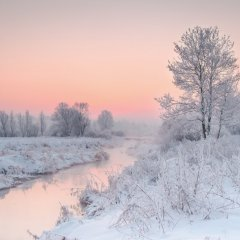 Winter Morning