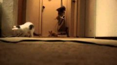 Kittens Playing Accidently Turn On Vacuum
