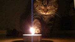 Cat Plays With Candle Fire