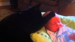 Cat Soothes Crying Baby To Sleep