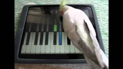 Animals Playing Video Games On iPads