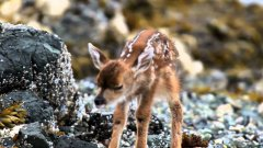 New Born Baby Deer