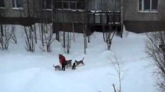 Russian Janitor Saves Girl From Pack Of Dogs