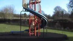 Dog Slides Down Playground Slide On Command