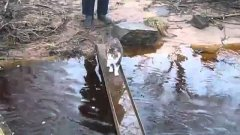Cat Carefully Walks Over Creek Without Getting Wet