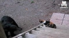 Cat Fights Off Bear From Backyard