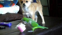 Dog And Parrot Fight Over Cup