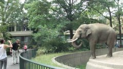Elephant throws mud at man at berlin zoo