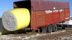 Truck scooping up barrels of cotton