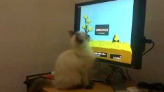 Cat Playing Duck Hunt