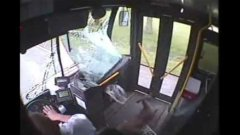 Deer crashes into bus