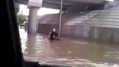 Dog helps man in wheelchair on flooded street