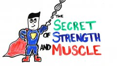 The scientific secret of strength and muscle growth
