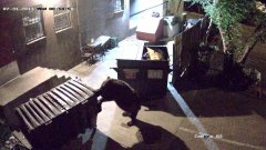 Bear steals dumpster from Colorado restaurant