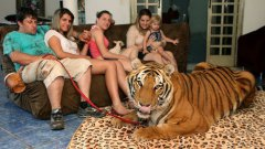 Family share home with pet tigers