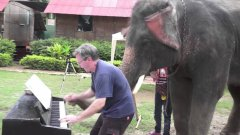 Elephant Plays Duet With Blues Piano Player
