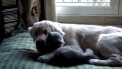 Cat And Dog Are Best Friends