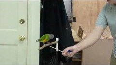 20 Parrot Tricks in 2 Minutes