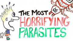 The Most Horrifying Parasites!