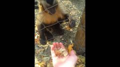 Monkey Teaches Human How To Crush Autumn Leaves