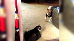 Cats Blocking Dogs From Passing Compilation